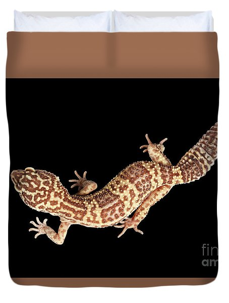Closeup Leopard Gecko Eublepharis Macularius Isolated On Black Background Duvet Cover by Sergey Taran