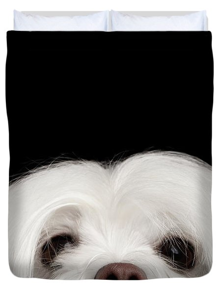 Closeup Nosey White Maltese Dog Looking In Camera Isolated On Black Background Duvet Cover