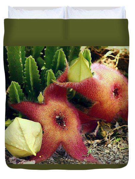 Closeup Of A Desert Starfish Duvet Cover