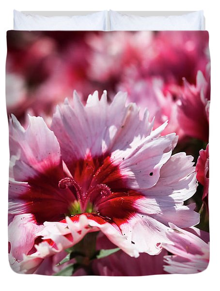 Closeup Of Dianthus Duvet Cover