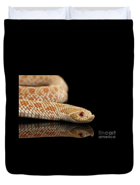 Closeup Pink Pastel Albino Western Hognose Snake, Heterodon Nasicus Isolated On Black Background Duvet Cover by Sergey Taran