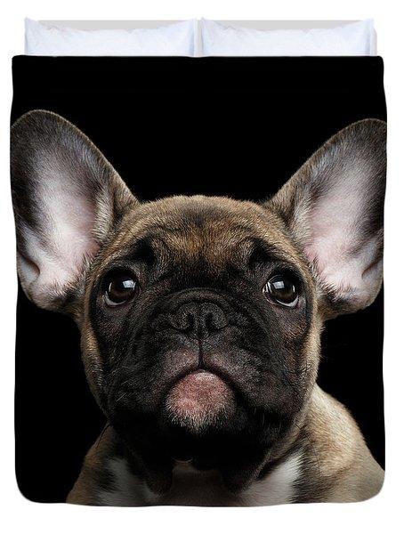 Closeup Portrait French Bulldog Puppy, Cute Looking In Camera Duvet Cover