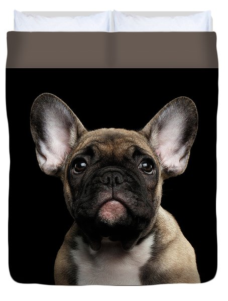 Closeup Portrait French Bulldog Puppy, Cute Looking In Camera Duvet Cover by Sergey Taran