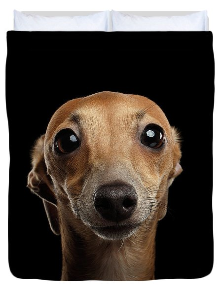 Closeup Portrait Italian Greyhound Dog Looking In Camera Isolated Black Duvet Cover