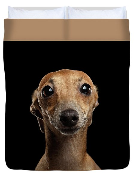 Closeup Portrait Italian Greyhound Dog Looking In Camera Isolated Black Duvet Cover by Sergey Taran