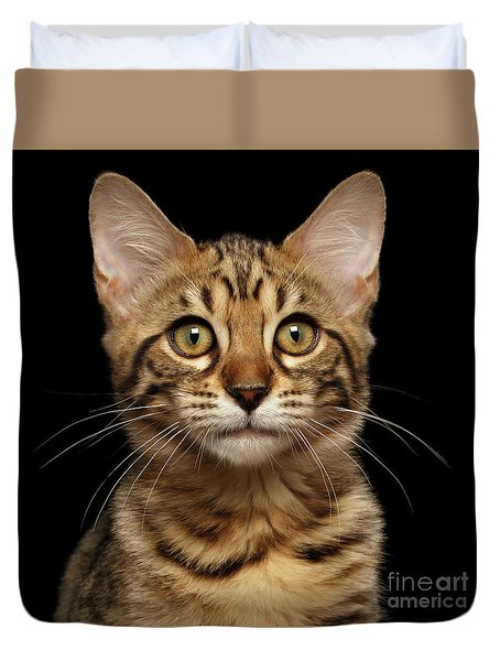 Closeup Portrait Of Bengal Kitty Isolated Black Background Duvet Cover by Sergey Taran