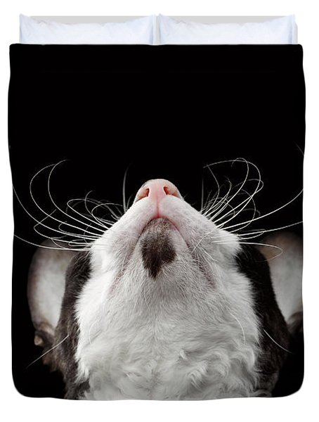 Closeup Portrait Of Cornish Rex Looking Up Isolated On Black  Duvet Cover