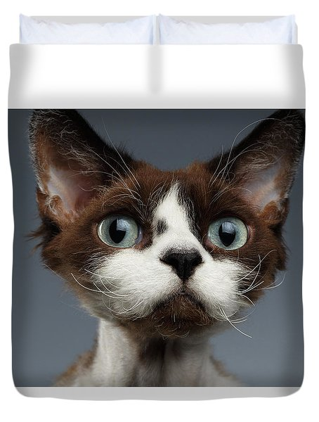 Closeup Portrait Of Devon-rex Looking In Camera On Gray  Duvet Cover by Sergey Taran