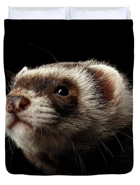 Closeup Portrait Of Funny Ferret Looking At The Camera Isolated On Black Background, Front View Duvet Cover