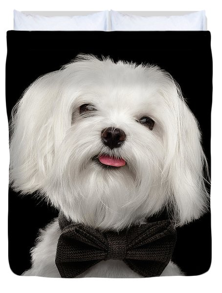 Closeup Portrait Of Happy White Maltese Dog With Bow Looking In Camera Isolated On Black Background Duvet Cover