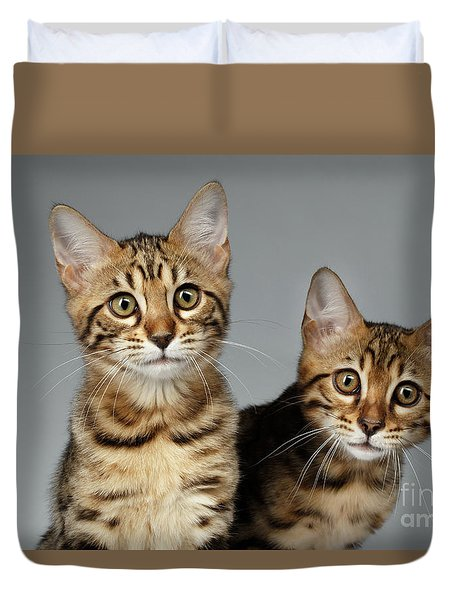 Closeup Portrait Of Two Bengal Kitten On White Background Duvet Cover by Sergey Taran