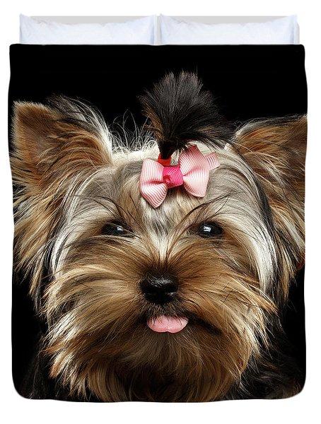 Closeup Portrait Of Yorkshire Terrier Dog On Black Background Duvet Cover