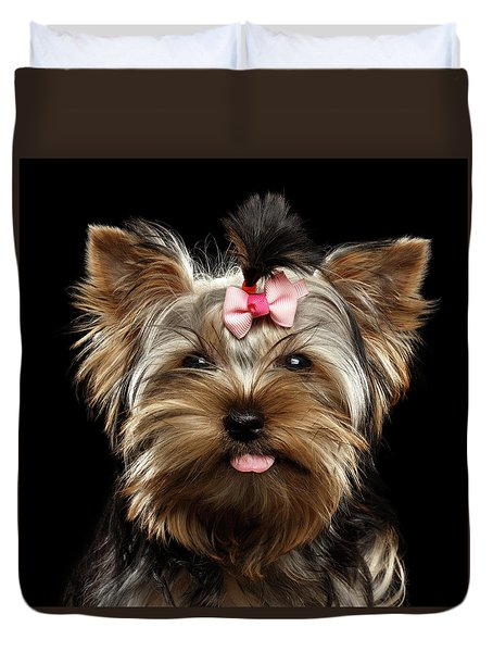 Closeup Portrait Of Yorkshire Terrier Dog On Black Background Duvet Cover