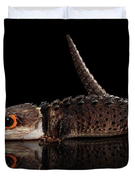 Closeup Red-eyed Crocodile Skink, Tribolonotus Gracilis, Isolated On Black Background Duvet Cover