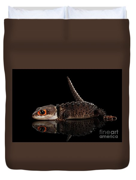 Closeup Red-eyed Crocodile Skink, Tribolonotus Gracilis, Isolated On Black Background Duvet Cover by Sergey Taran