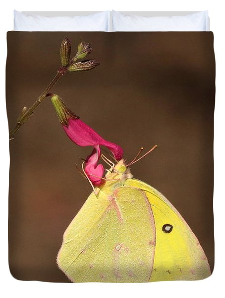 Clouded Sulphur Butterfly On Pink Wildflower Duvet Cover