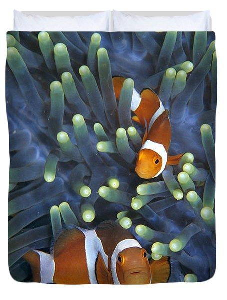 Clown Anemonefish Amphiprion Ocellaris Duvet Cover