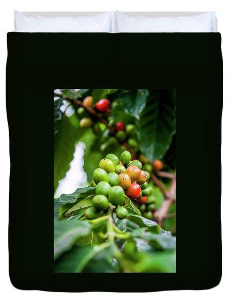 Coffee Plant Duvet Cover