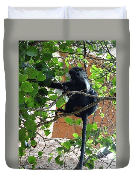 Colobus Monkey Eating Leaves In A Tree - Full Body Duvet Cover