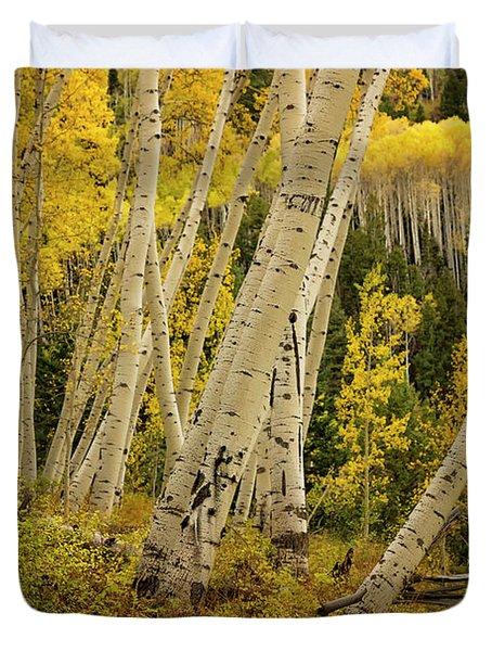 Colorado Fall Aspen Grove Duvet Cover