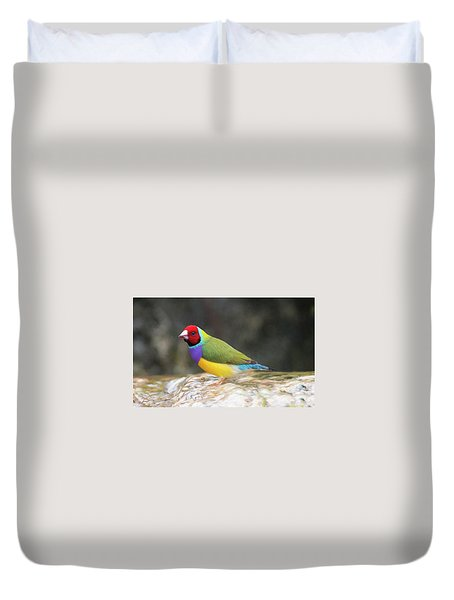 Colorful Lady Gulian Finch  Duvet Cover