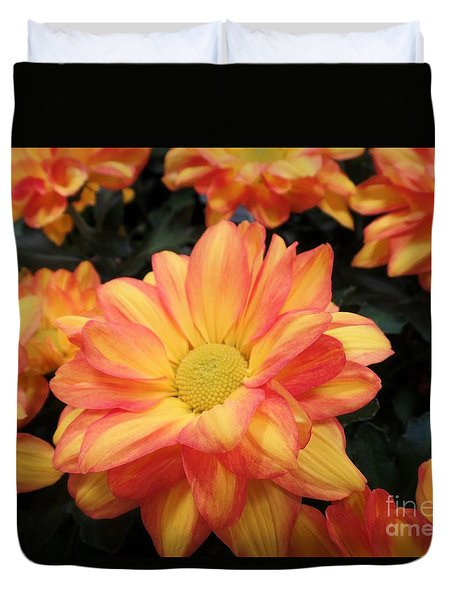 Duvet Cover featuring the photograph Colorful Mums by Ray Shrewsberry