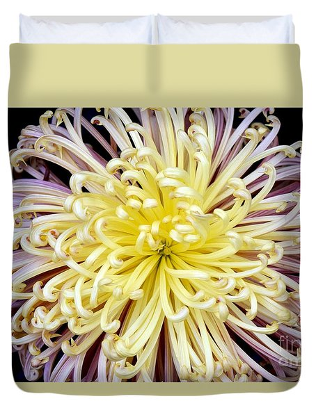 Colorful Spider Chrysanthemum   Duvet Cover