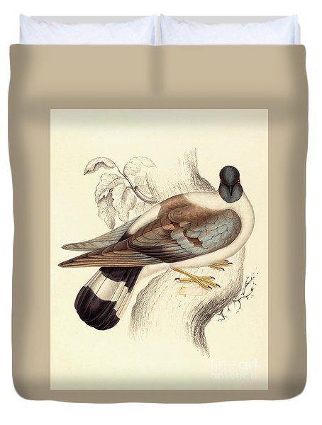 Columba Leuconota, Snow Pigeon Duvet Cover by Elizabeth Gould