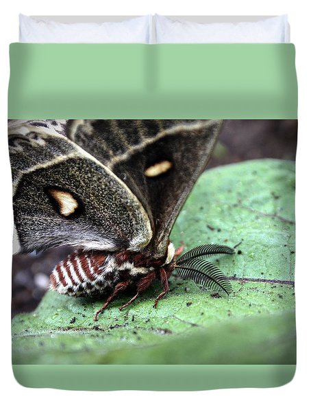 Columbia Silk Moth Duvet Cover