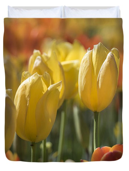 Coming Up Tulips Duvet Cover