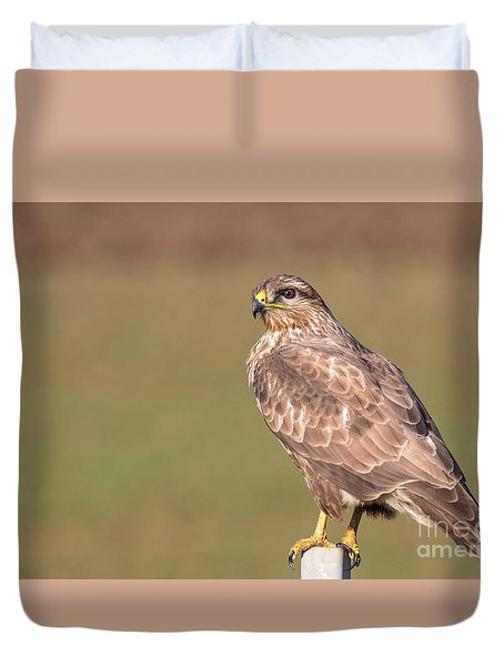 Duvet Cover featuring the photograph Common Buzzard Along The Highway Nis Budapest by Jivko Nakev