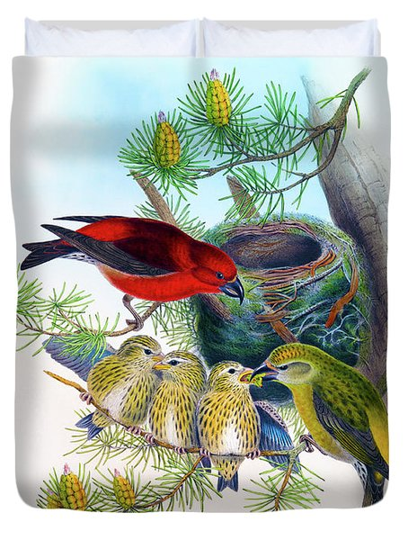 Common Crossbill Antique Bird Print John Gould Hc Richter Birds Of Great Britain  Duvet Cover