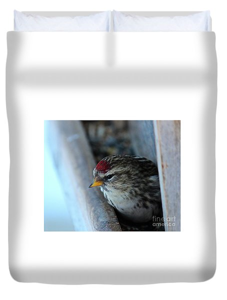 Duvet Cover featuring the photograph Common Redpoll by Ann E Robson