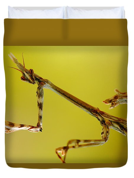 Duvet Cover featuring the photograph Cone Head Mantis by Richard Patmore