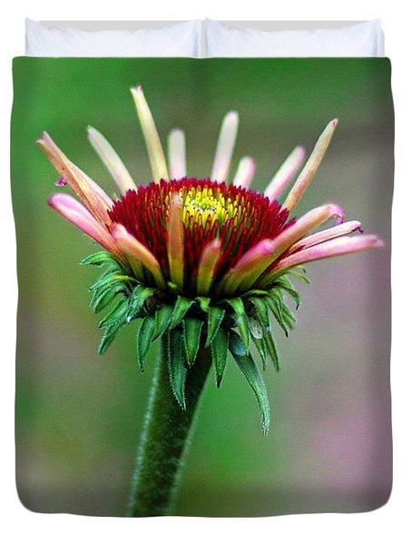 Coneflower Bloom Duvet Cover