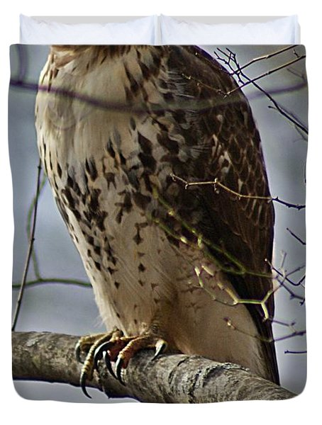 Cooper's Hawk 2 Duvet Cover by Joe Faherty