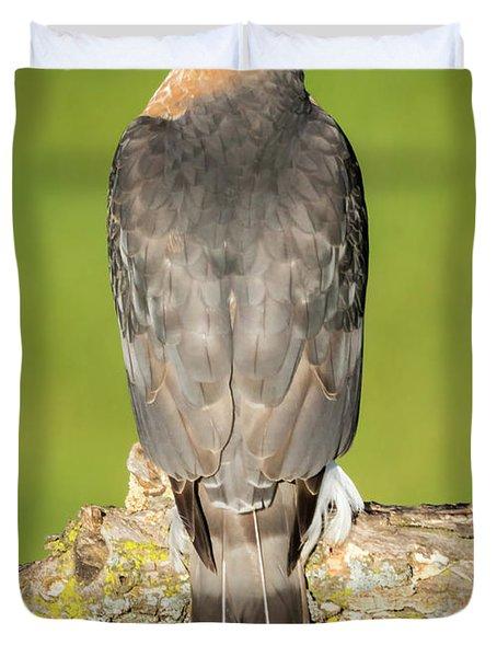 Cooper's Hawk In The Backyard Duvet Cover