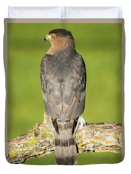 Cooper's Hawk In The Backyard Duvet Cover