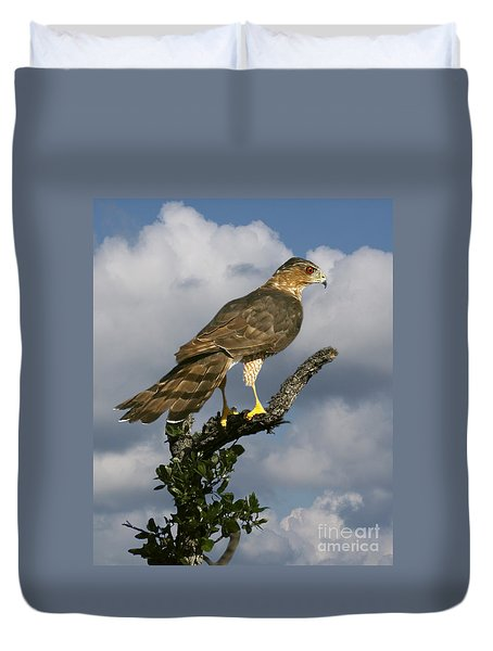 Cooper's Hawk On Watch Duvet Cover