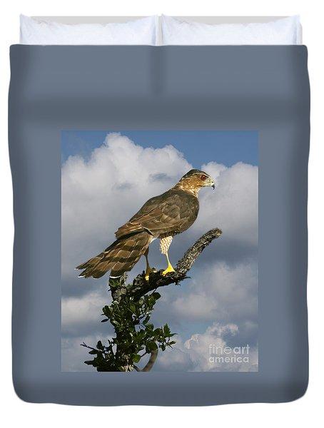 Cooper's Hawk On Watch Duvet Cover