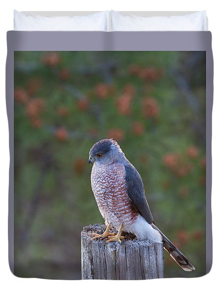 Coopers Hawk Perched Duvet Cover