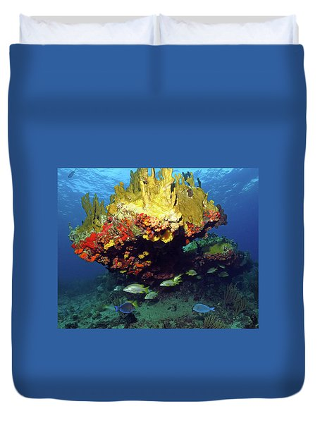 Coral Reef Scene, Calf Rock, Virgin Islands Duvet Cover