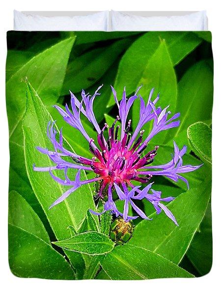 Centaurea Montana Duvet Cover