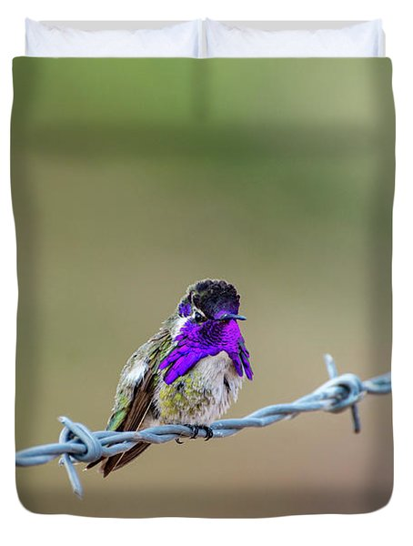 Costa's Hummingbird Duvet Cover