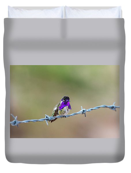 Costa's Hummingbird Duvet Cover