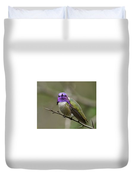 Costa's Hummingbird, Solano County California Duvet Cover by Doug Herr