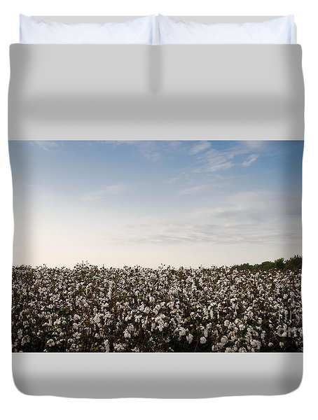 Cotton Field 2 Duvet Cover by Andrea Anderegg