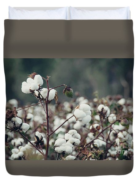 Cotton Field 5 Duvet Cover by Andrea Anderegg