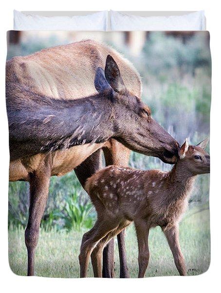 Cow And Calf Elk Duvet Cover