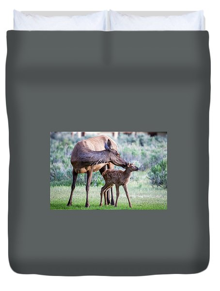 Cow And Calf Elk Duvet Cover